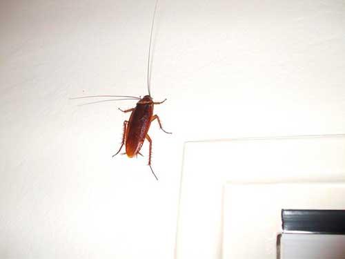 откуда появляются тараканы
