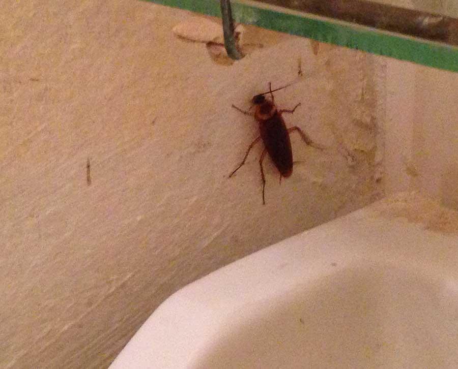 10 мест откуда могут заползти тараканы в дом