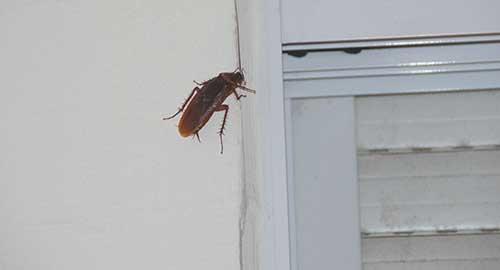 Таракан ползет к холодильнику