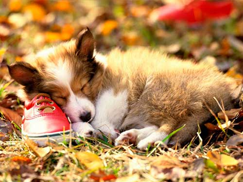 Спит собака