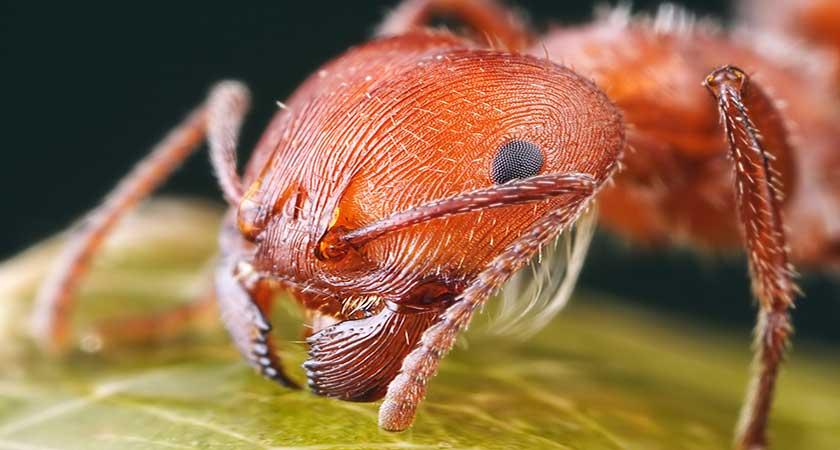 Как избавиться самостоятельно от муравьев в огороде – лучшие рецепты