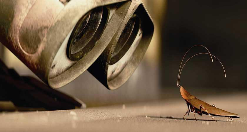 Тараканы куда ушли – радоваться или волноваться