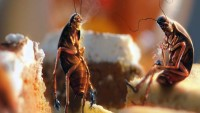 Почему тараканов называют стасиками- версии и факты