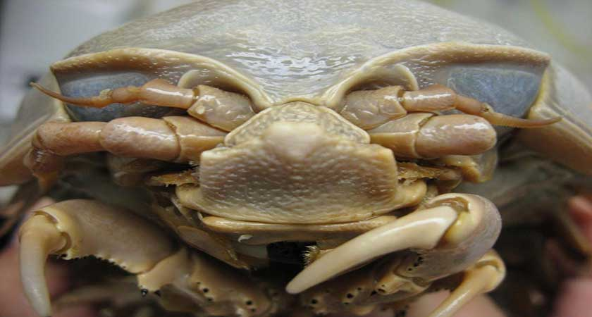 Таракан под микроскопом