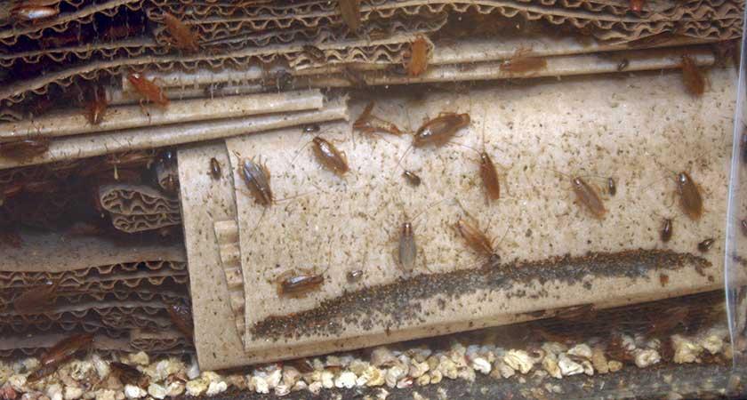 Откуда берутся в доме тараканы – самые основные пути проникновения
