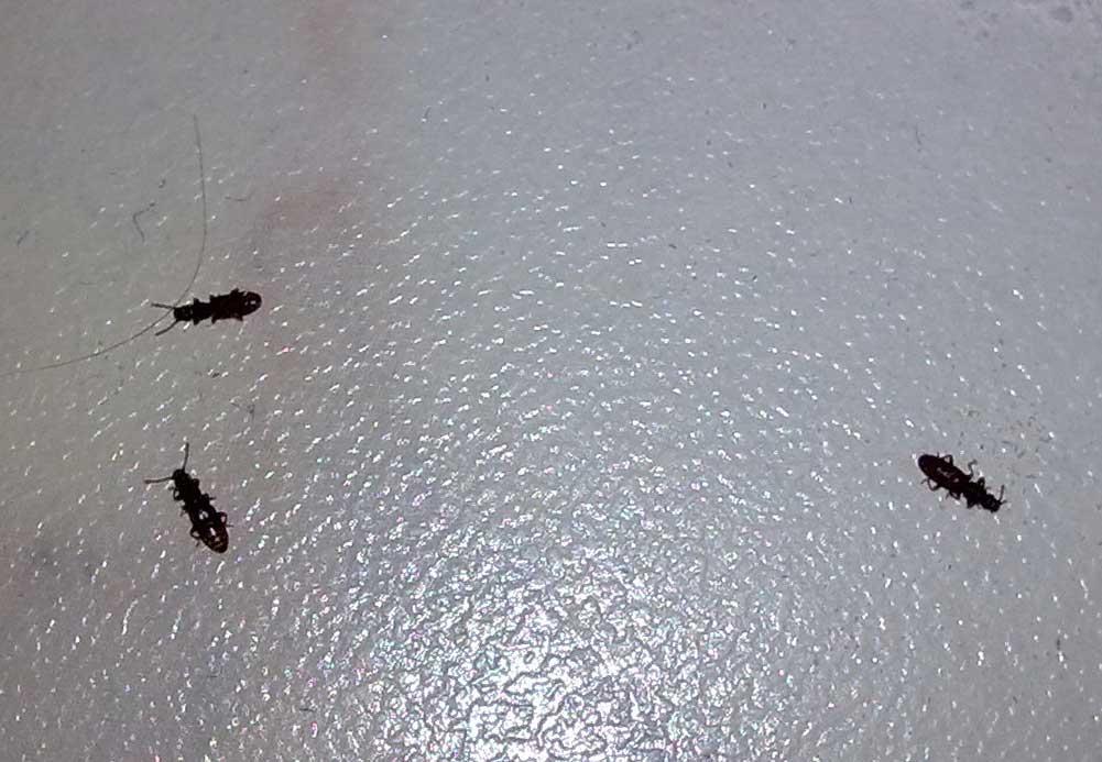 насекомые которых вытащили из крупы