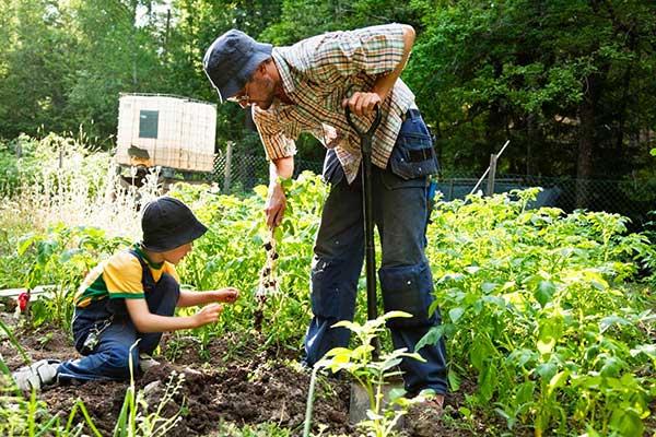 Как вывести почвенного клеща