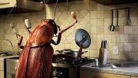 Борьба с тараканами – слабые места прусаков, особенность борьбы, эффективные методы