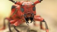 Чем кусает муравей, что получается так больно