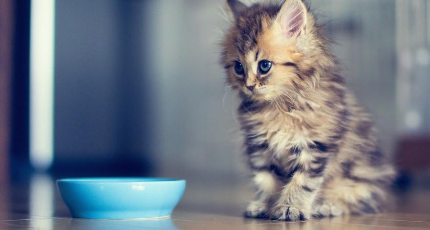 Как избавиться от блох у котенка – полезные советы для спасения домашнего любимчика