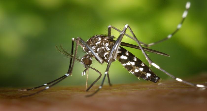 Укусы комаров на теле