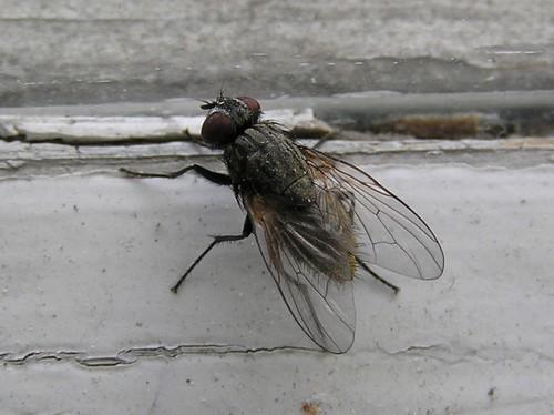 Откуда берутся мухи