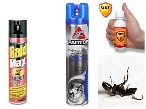 Домашние муравьи: как избавиться от них?