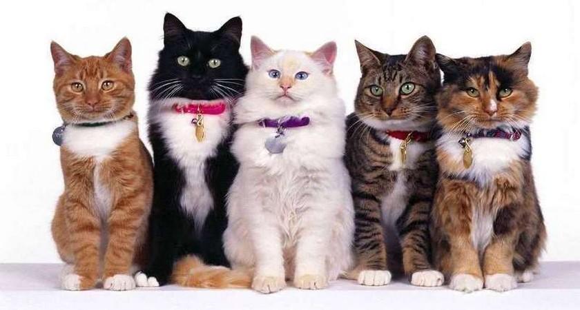 Ошейник от блох для кошек