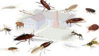 Домашние насекомые – фото и названия