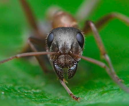 К чему нам снятся муравьи