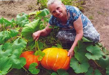 Клоп периллюс – это настоящая находка для огородников