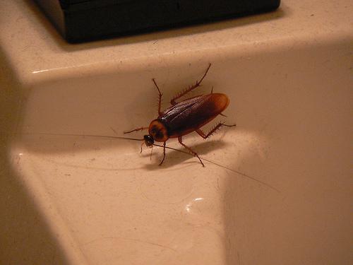 раствор от тараканов