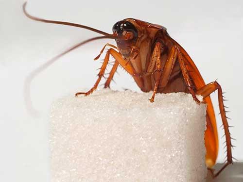 против тараканов