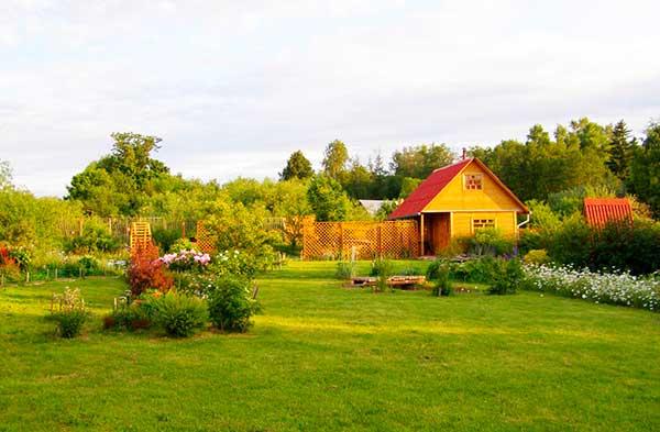 средства борьбы с муравьями на садовом участке