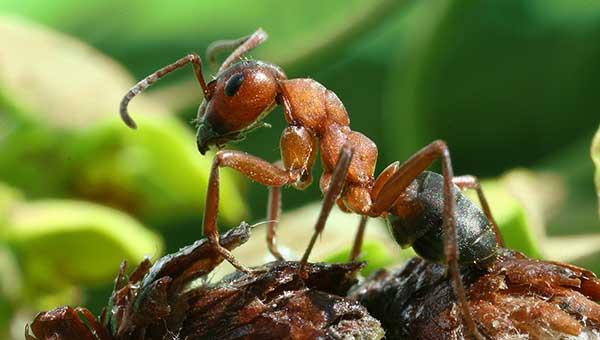 муравьи в доме как их вывести