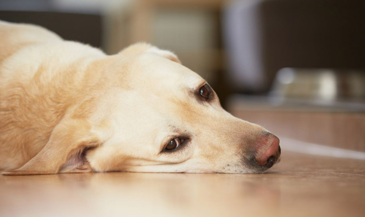 Собака заболела