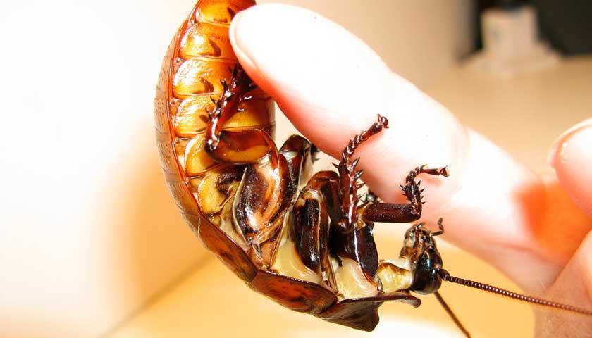 Таракан на руке
