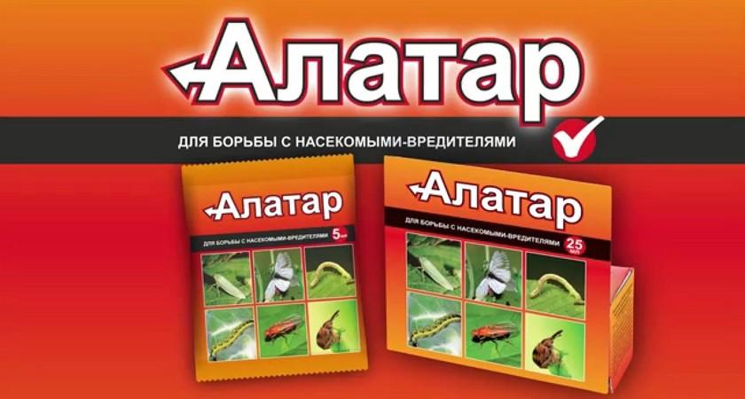 Алатар- свойства и особенности применения для борьбы с насекомыми