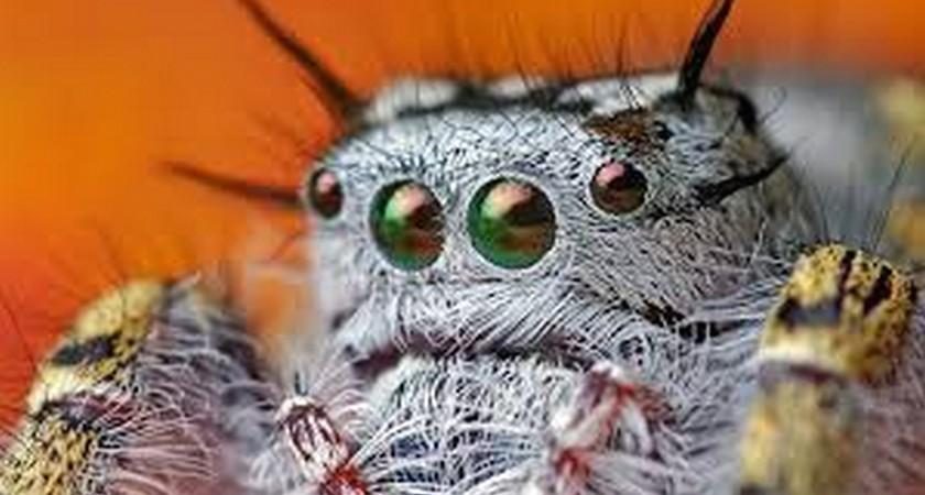 Постельные паразиты – основные виды ночных «чудовищ»