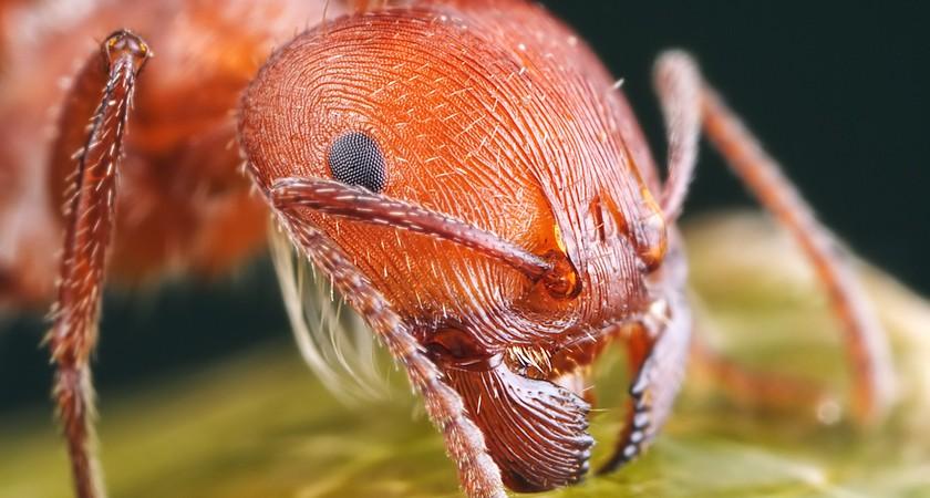 Желтые муравьи – как отвоевать свою территорию