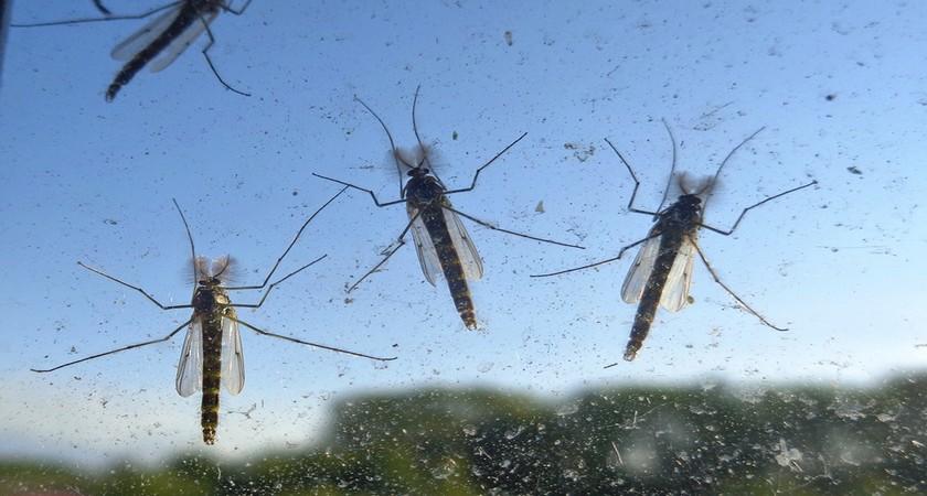 сезон комаров