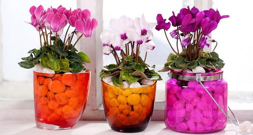 Цветочные мошки