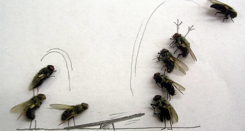Порошок от мух