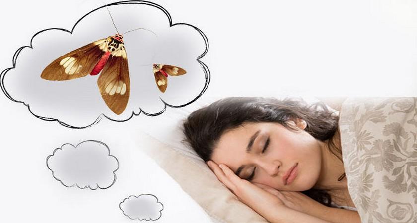 К чему снится моль