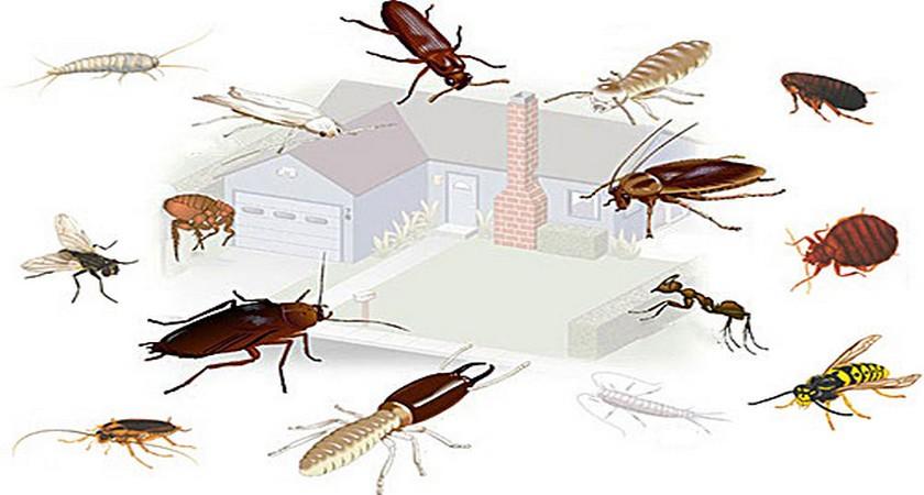 дом насекомые