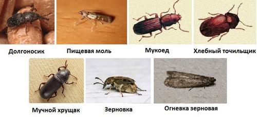 жуки на кухне