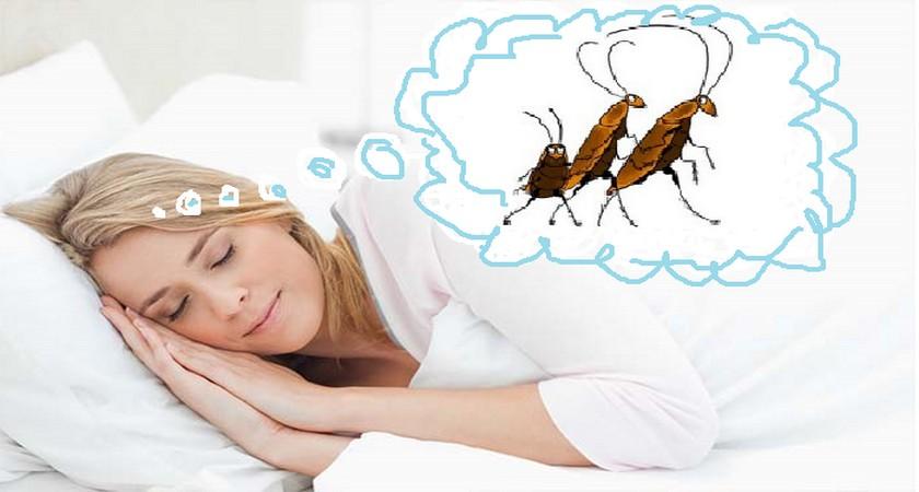 Приснились тараканы что означает появление этих насекомых в сновидении