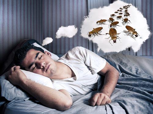тараканы во сне