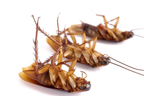 убитые тараканы