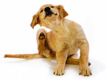 Лучшее средство от блох для кошек и собак – эффективные препараты и народные хитрости