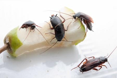 Чем питаются эти насекомые
