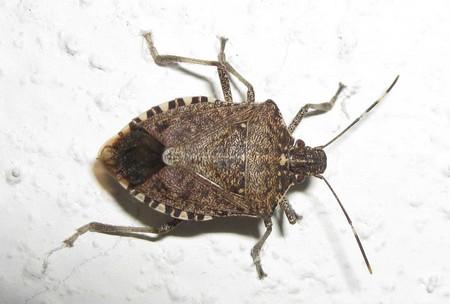 Как выглядит насекомое на фото?