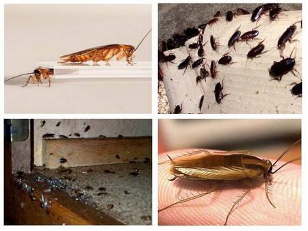 Электрический отпугиватель быстро избавляет от тараканов