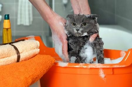 Шампуньотблохдлякошек и котят – состав, эффективность и правила применения