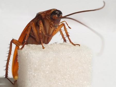 От тараканов, поселившихся в квартире, избавиться не так-то просто