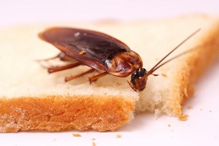 Убрать все источники питания для этих насекомых